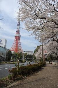 東京タワー桜