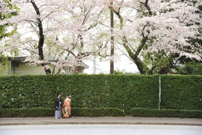 和装前撮り桜ロケ東京