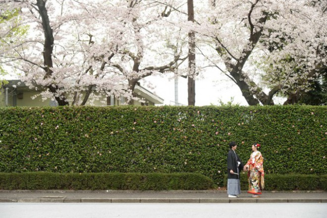 神社結婚式東京春